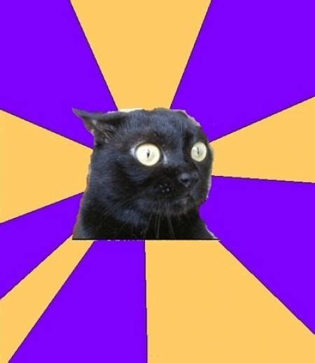 Anxiety Cat Meme - anxiety cat hilarious cat pictures with captions