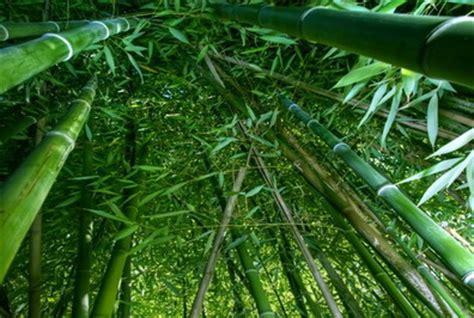 la foresta dei pugnali volanti la foresta dei pugnali volanti in cina ciak si gira