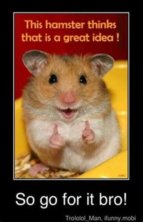 cute hamster quotes quotesgram
