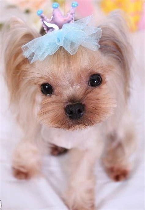 Animal Hair Tie grooming bows crown hair accessories tulle pet