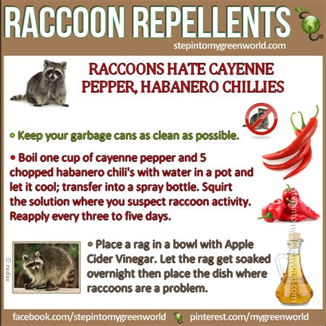 Healthy Living Best Repellent Recipes To Get Rid Of How To Get Rid Of Raccoons In Your Backyard