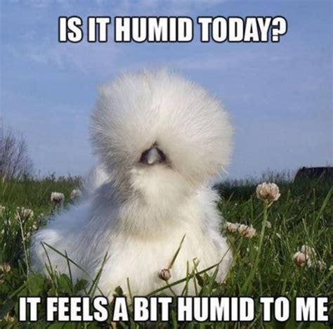 Funny Beauty Memes - funny beauty memes popsugar beauty