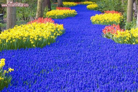 giardini olandesi gli incredibili giardini di keukenhof in olanda fanno