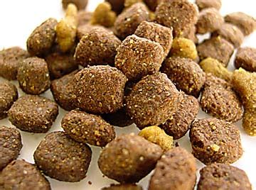 best kibble for dogs food vs food healthy for