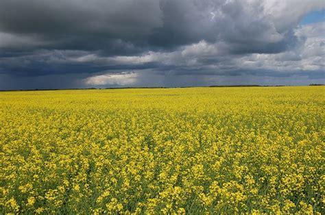bloemen en wolken lucht landschap wolken planten bloemen frankrijk gebied