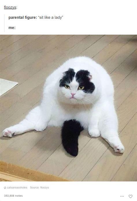 cat posts  tumblr   guaranteed    laugh purrtacular part