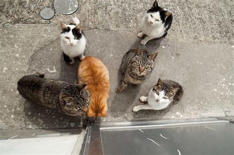 cat island japan better than disneyland japan s cat island absolutely