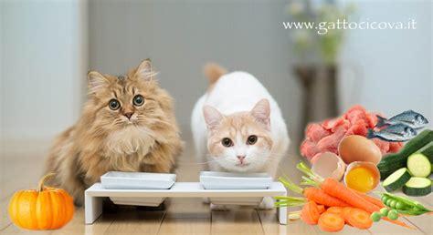 alimentazione naturale nel gatto proteine di qualit 224