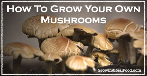 how to grow your own mushrooms growing real food