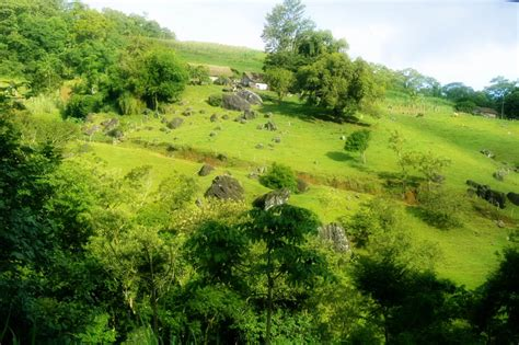 landscaping hills hill landscape cows trees rocks waterfalls