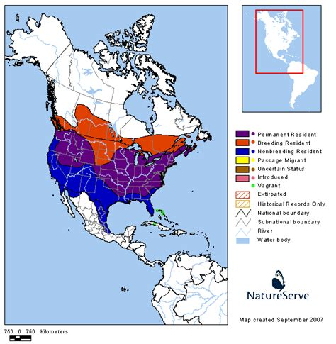 what is the migration pattern of american goldfinches