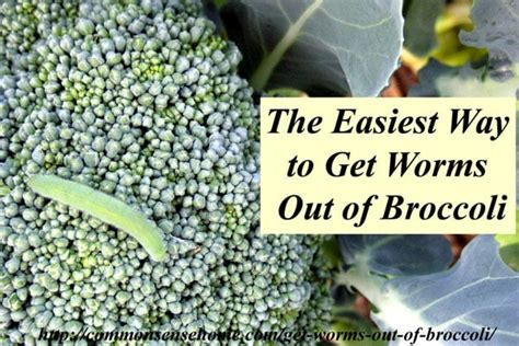 the easiest way to get worms out of broccoli