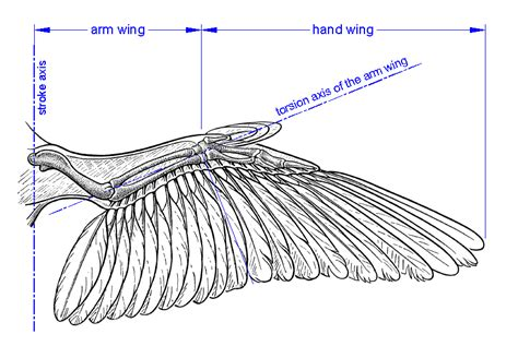 wing diagram my journey towards infinity flapping wing mechanism or