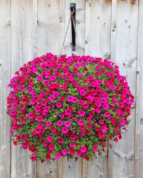 best 25 hanging flower baskets ideas on