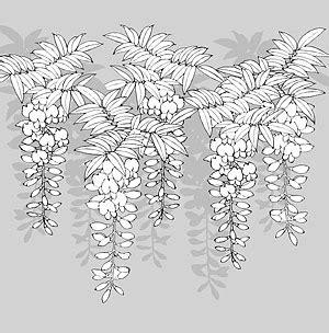 drawing  flowers    vectorpsdflash