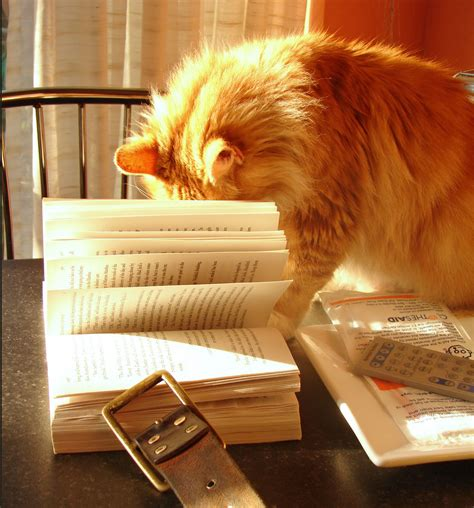 Cat And Books cat reading madam suddenly noticed a book which made