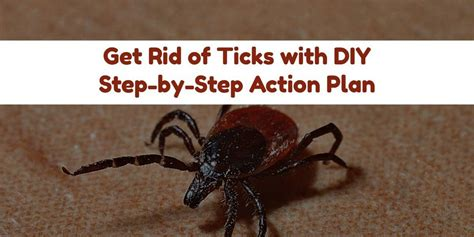 how to get rid of ticks on dogs and humans in yard house
