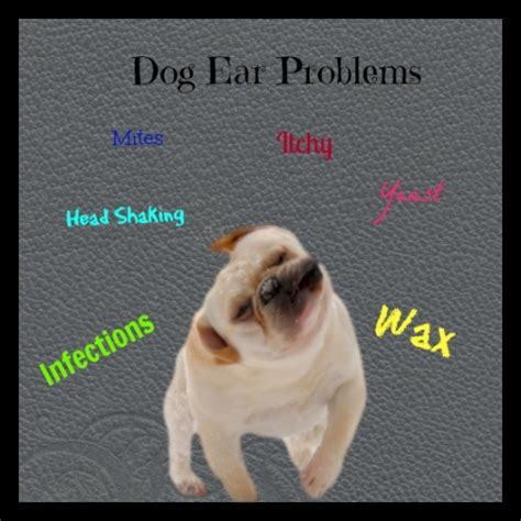 Home Remedies For Ear Mites In Dogs by Ear Mites In Dogs Home Tests And Remedies