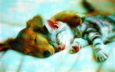 imagenes para perfil de facebook nuevo diferentes im 225 genes para perfil facebook de perros y gatos