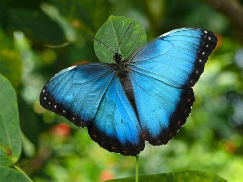 papillon pictures papillons junglekey fr image