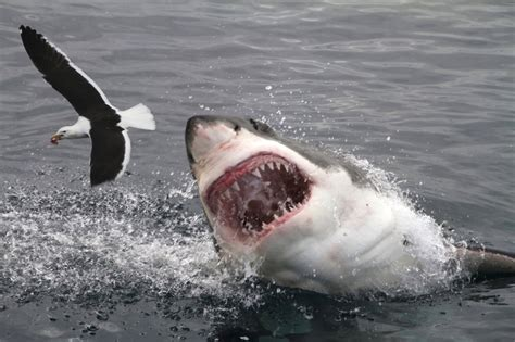what is the most dangerous the 10 most dangerous sharks howstuffworks
