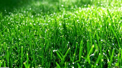 green grass wallpaper green grass wallpaper 17657 open walls