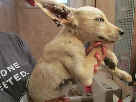 rescued puppies three adorable puppies rescued in the negev telegraphic agency