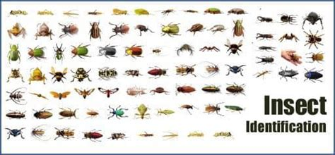 House Types In Georgia by Common Insect And Bug Identification American Pest Solutions