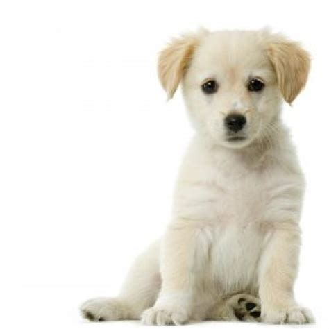puppy care and puppy preventive care mobile veterinary service