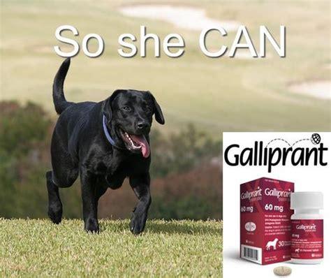 galliprant for dogs arthritis