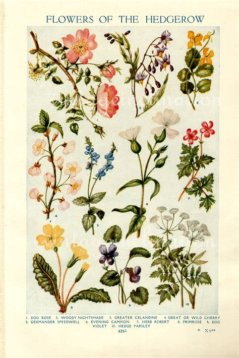 vintage tattoo photo prints vintage botanical prints flowers of the by vintageinclination