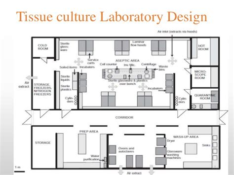 laboratory design and layout ppt animal cell culture techniques