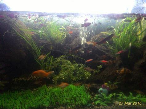 jual batu alam  aquarium  aquascape  lapak rika