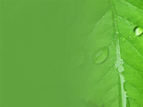 wallpaper daun hijau hd wallpaper powerpoint daun 清新水珠大叶子ppt背景图片 第一ppt