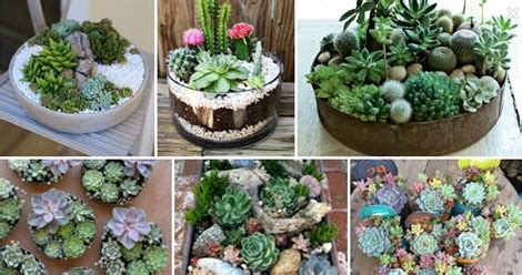facts about succulents 10 interesting facts about succulents you didn t know about