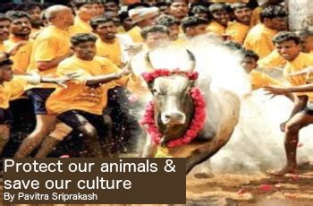 Protect Our Culture ecologic protect our animals save our culture shilpa
