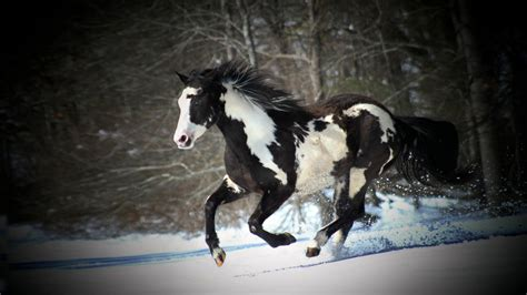 wallpaper horse free download black and white horse running in snow desktop wallpaper