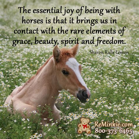 quotes about horses spirit quotes quotesgram