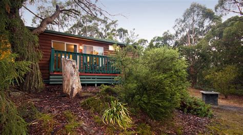 valley cabins lorne hinterland cabins accommodation