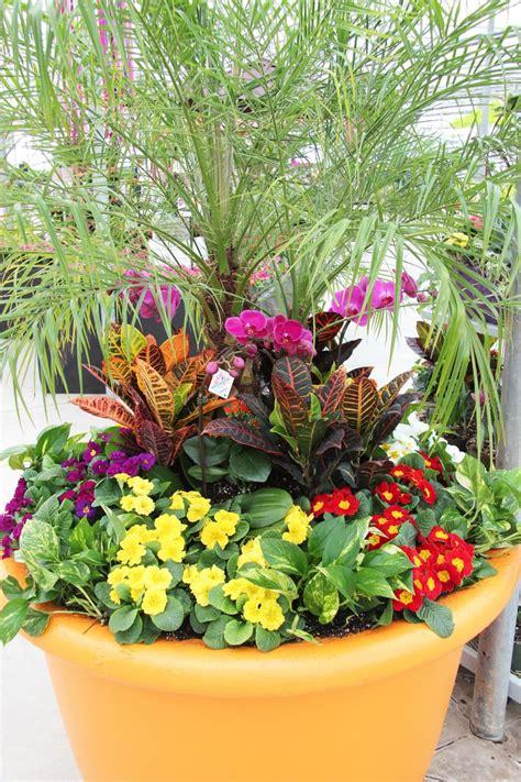 images  tropical plants  pinterest