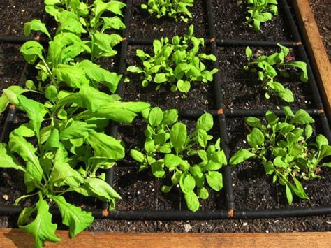 Garden Spacing - square foot gardening 101 how to plant a square foot garden