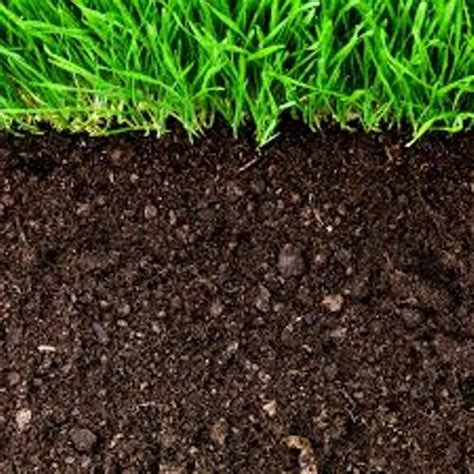 10 interesting soil facts my interesting facts