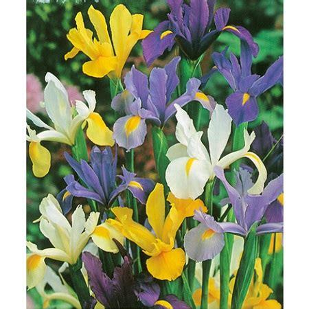 piantare fiori quali fiori piantare a maggio