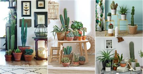 cactus home decor indoor cactus garden ideas to display your collection in a