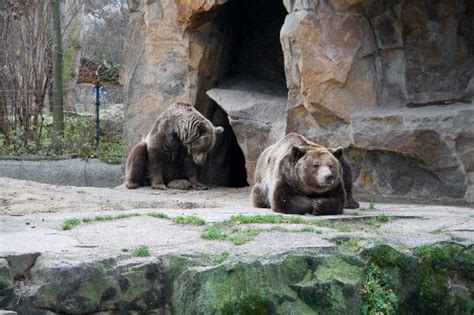 Zoo Garten Berlin by Berlin Zoo Map Picture Of Zoologischer Garten Berlin Zoo Berlin Tripadvisor