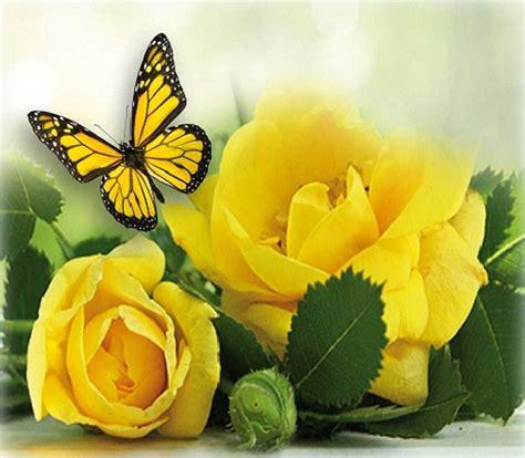 imagenes flores bellas gratis imagenes de rosas hermosas para descargar gratis las