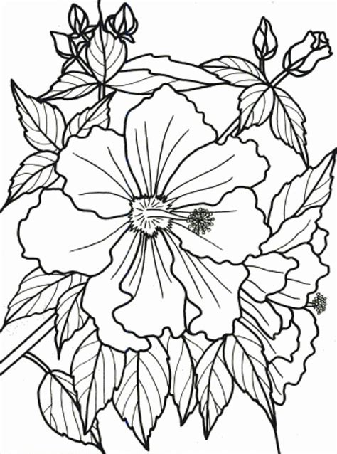 free coloring pages of tropical flowers tropical flowers stained glass coloring book