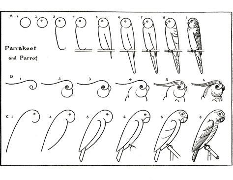 learn how to draw doodle learn to draw parrots the graphics