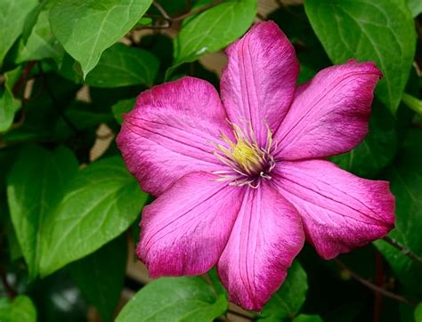 13 Common Garden Flowers That Are Poisonous Gardenoholic Poisonous Garden Flowers