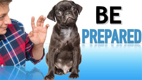 how to prepare for a new puppy how to prepare your family for a new puppy funnydog tv